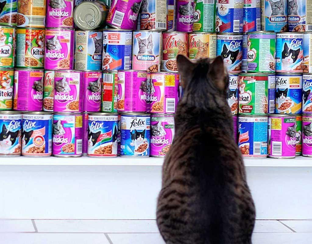 Сложности выбора: кот у прилавка не может определиться